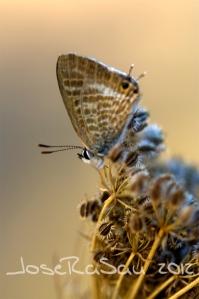 insectos_07
